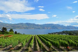 The Kelowna area is home to many award-winning wineries with beautiful scenery